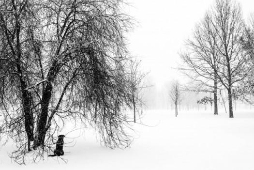 black dog in snow blizzard trees izvor park bucharest